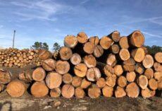 Chiêm bao thấy gỗ đánh số gì? Có ý nghĩa gì?