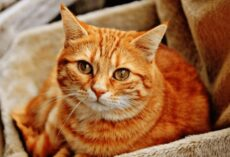Mơ thấy mèo đánh con gì? – Ý nghĩa giấc mơ thấy con mèo