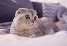 Mộng thấy mèo ẩn chứa điềm báo gì, lành hay dữ?