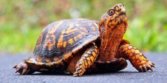Nằm mơ thấy rùa đánh con gì ? Con rùa là số mấy ?