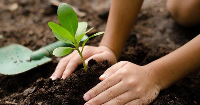 mộng thấy trồng cây