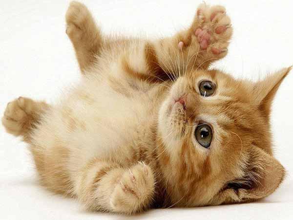 giấc mơ thấy mèo con