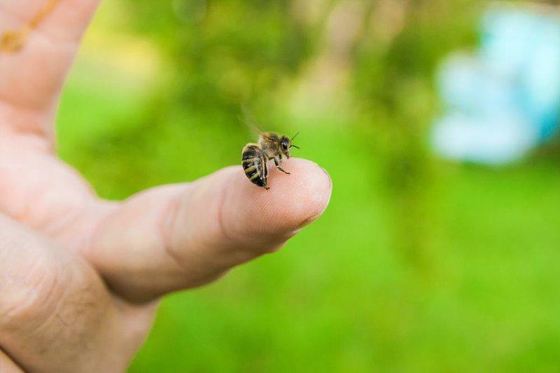 Mơ thấy ong đốt
